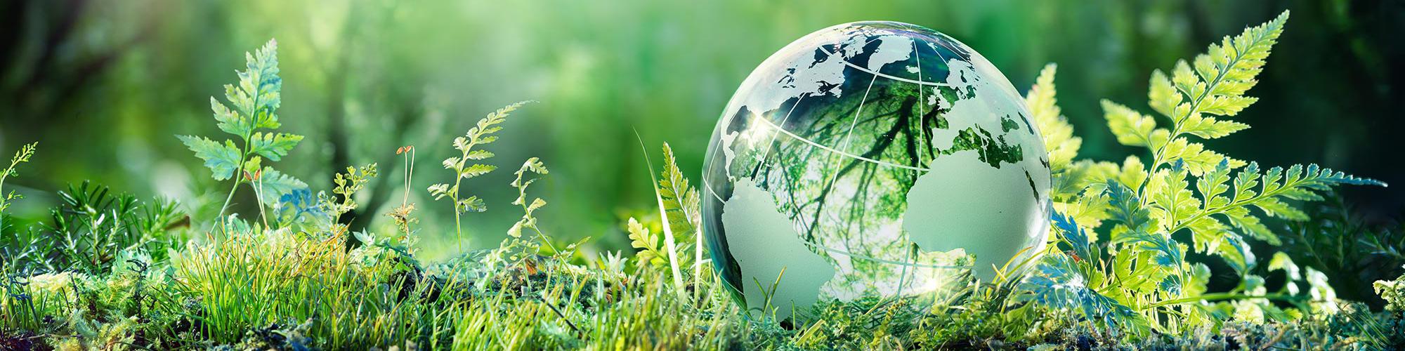 Glass globe sitting in grass.